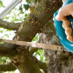 Tree_and_Shrub_Care-hand_saw