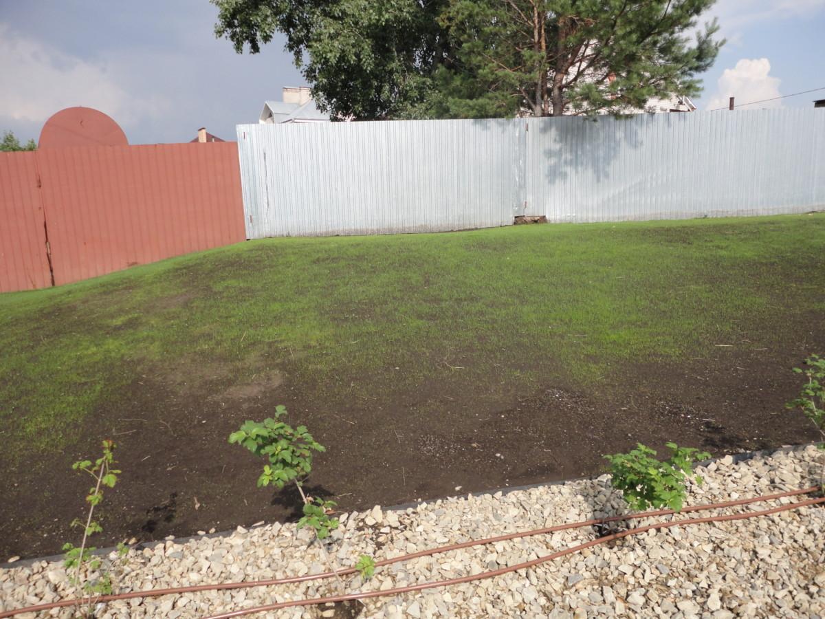 Посевной газон в первую неделю (7)