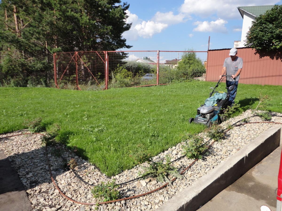 Посевной газон через 2 недели (4)