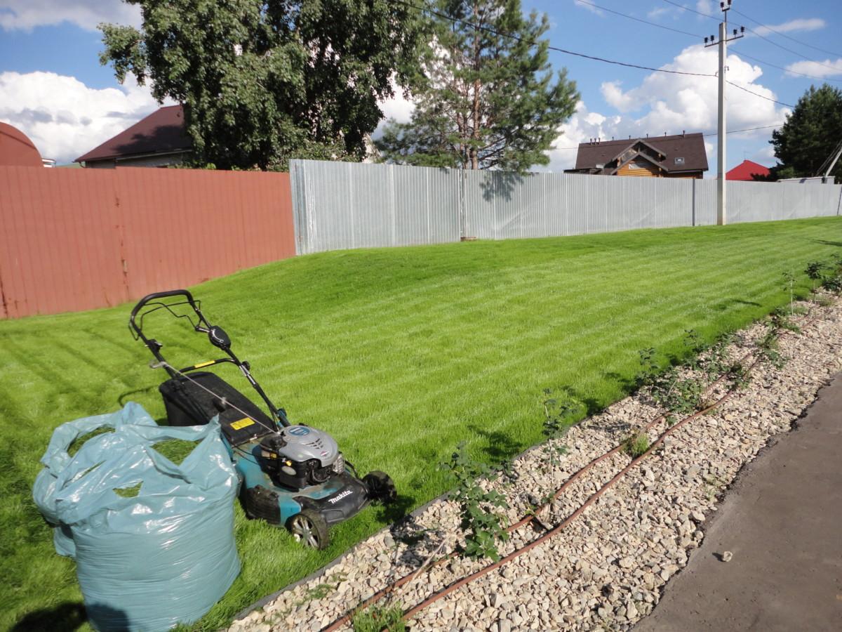 Посевной газон через 2 недели (5)