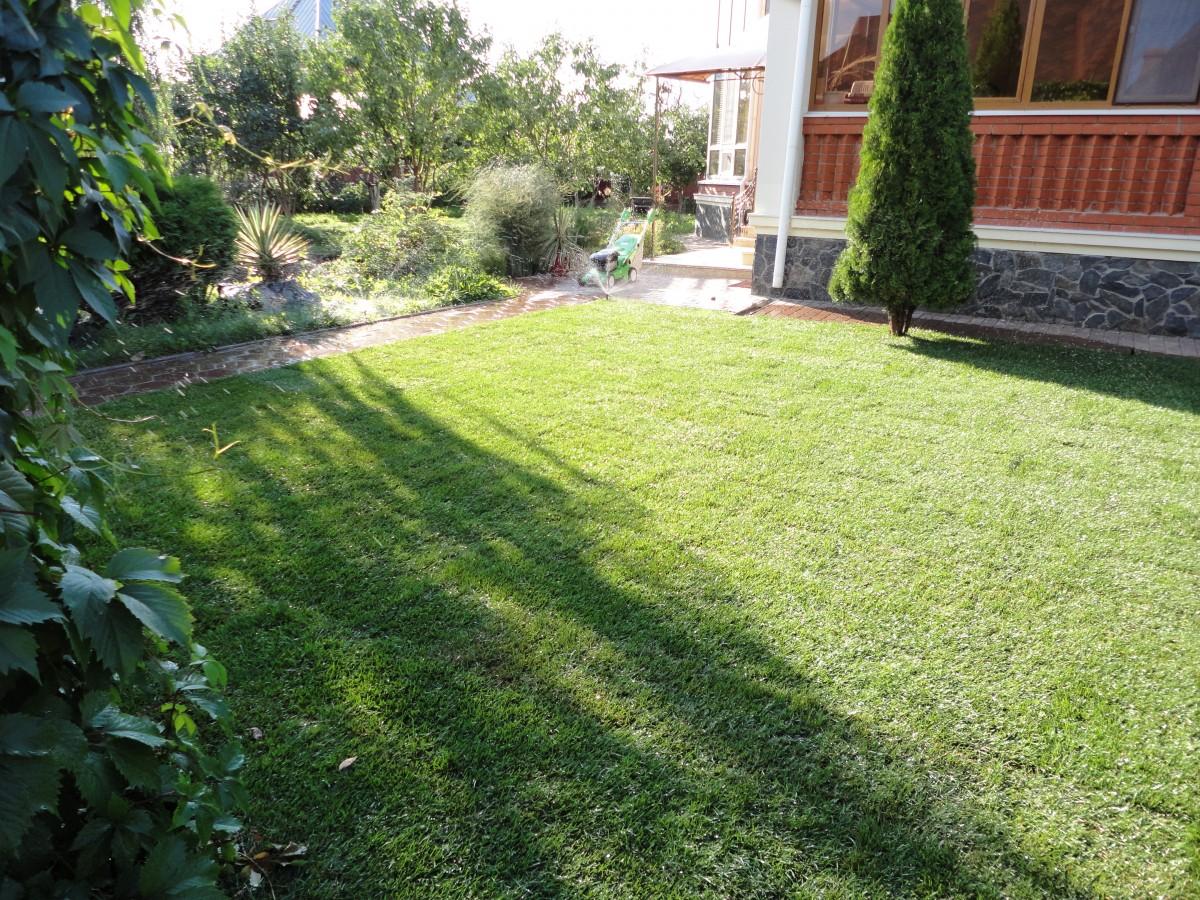 Свеже уложенный рулонный газон (2)