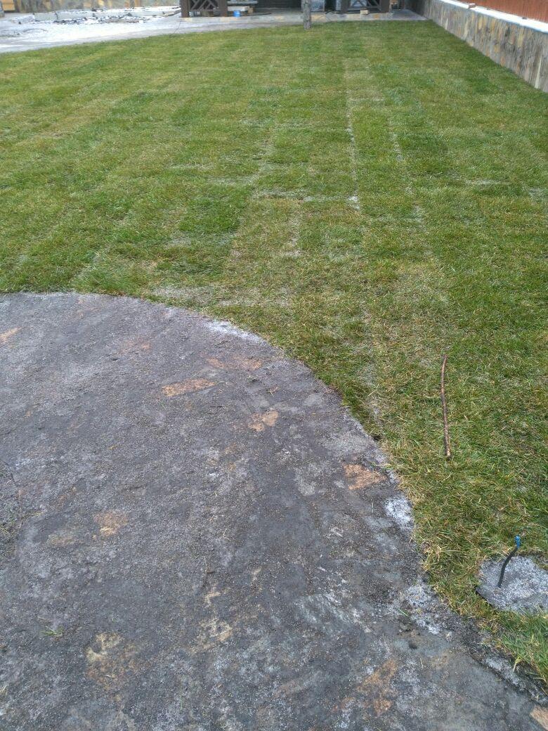 Укладка рулонного газона октябрь (3)
