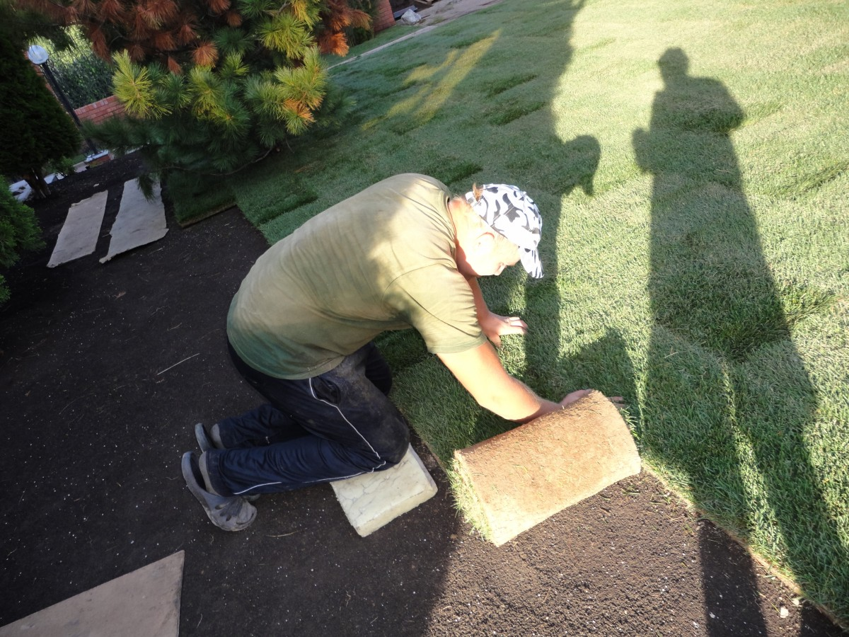 Укладка рулонного газона (4)
