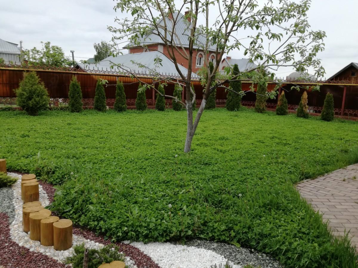 Устройство газона из клевера ползучего (2)