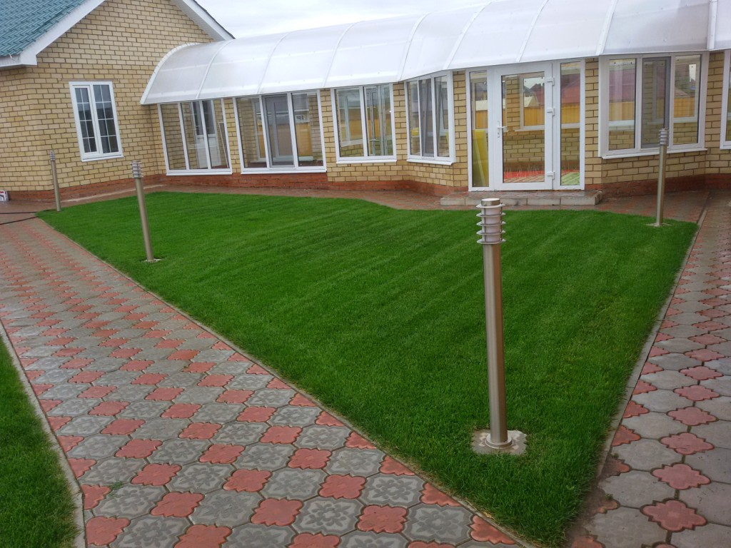 Рулонный газон через месяц (4)
