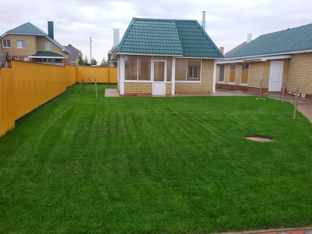Рулонный газон через месяц