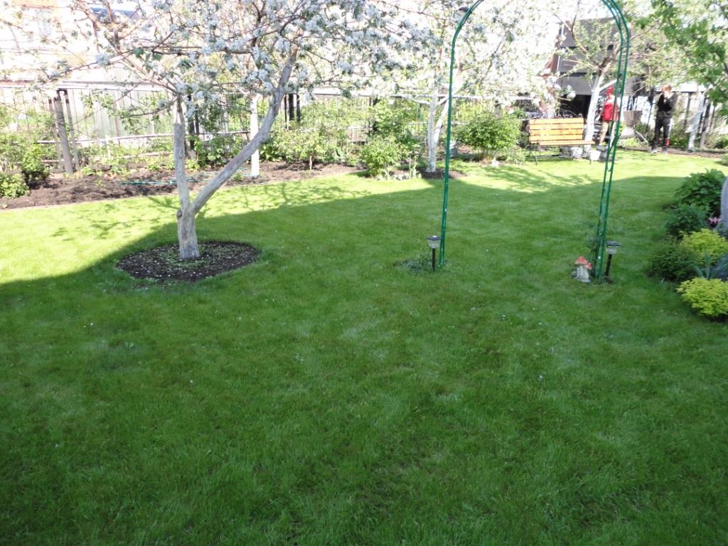 посевной газон (1)