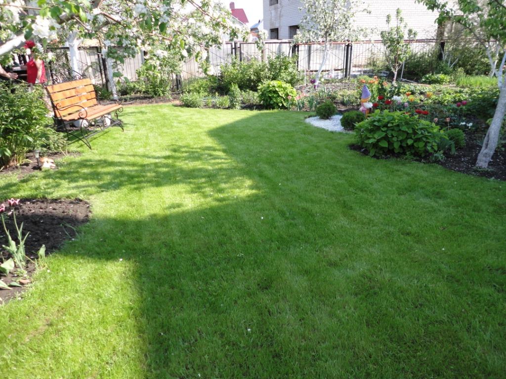 посевной газон (2)